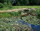 Natūralus baseinas su hidroizoliacija