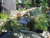 Dekoratyvinis baseinas su vandens augalais