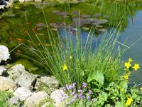 Telkinių tipai - dekoratyviniai baseinai